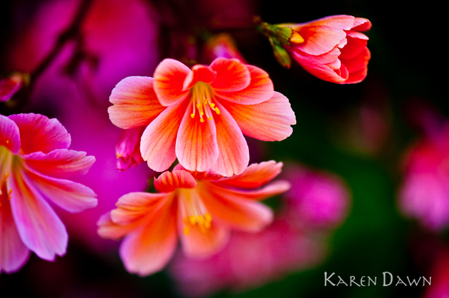 Photograph Flowers by Karen Dawn on 500px