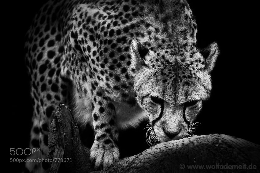Photograph HUNTING by Wolf Ademeit on 500px