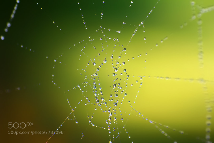 Photograph DEW by Sabriamin M on 500px