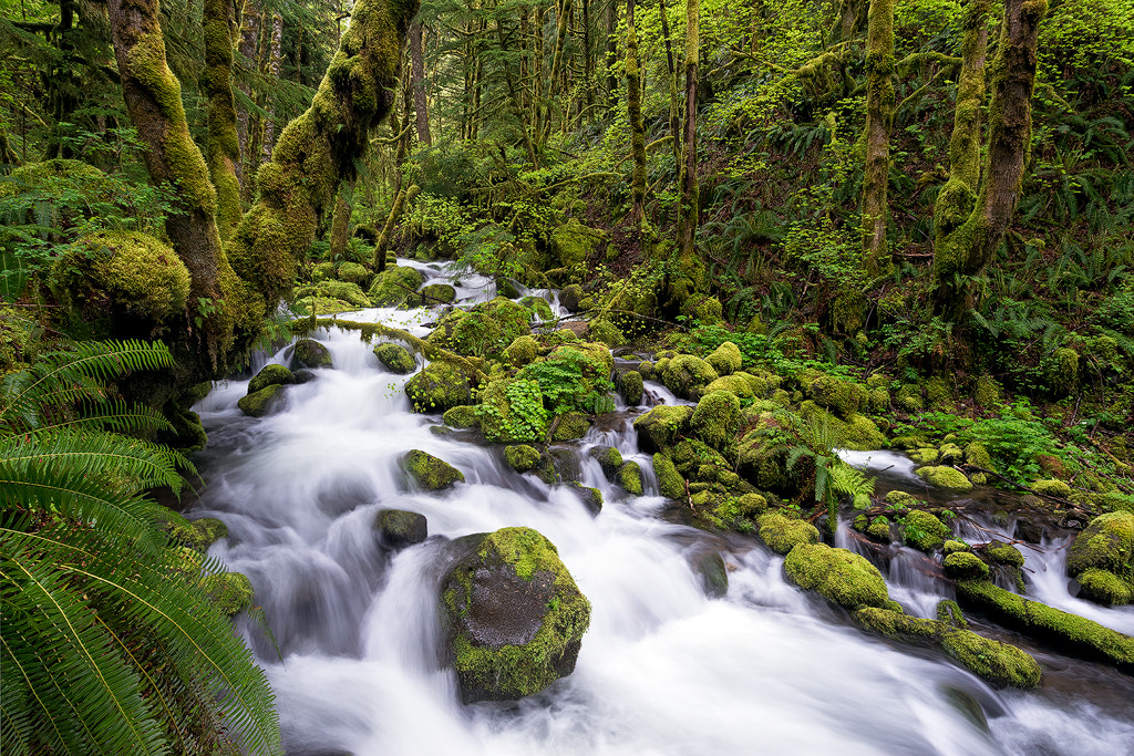 Photograph Ruckel Creek by James Newkirk on 500px