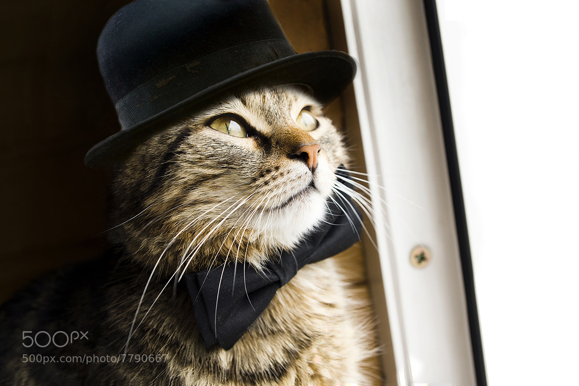 Photograph Mr. Puss by Alex Novak on 500px