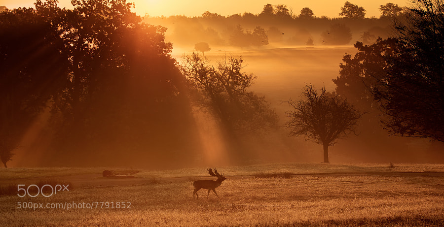 Photograph early mist by Mark Bridger on 500px