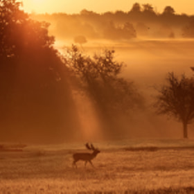 early mist by Mark Bridger (bridgephotography)) on 500px.com