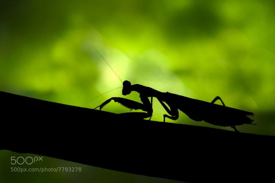 Photograph The Mantis by Mario Moreno on 500px