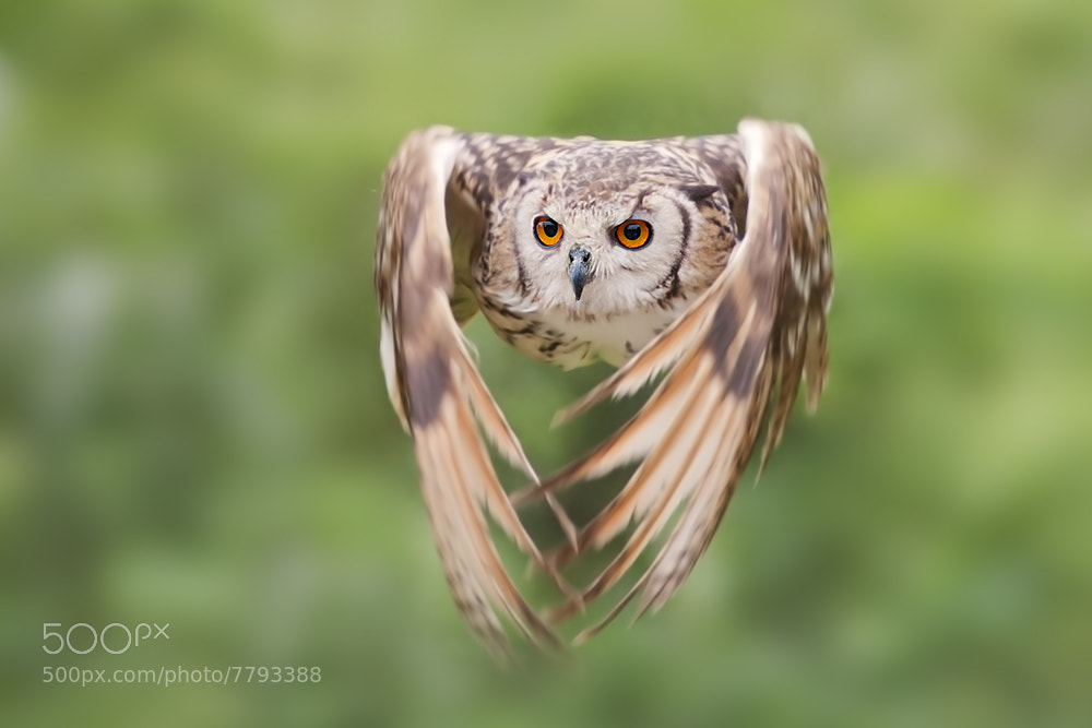 Photograph I fly by Stefano Ronchi on 500px