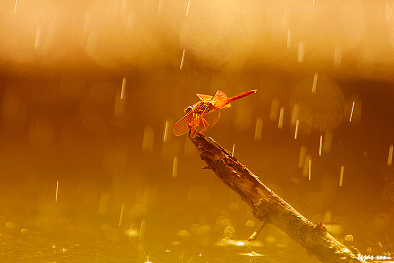 """Photograph """"dragonfly by Tejas Soni on 500px"""