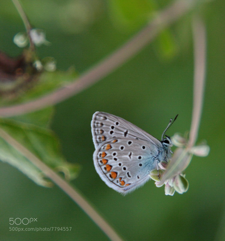 Photograph Butterfly by Monica Ruzsilla on 500px