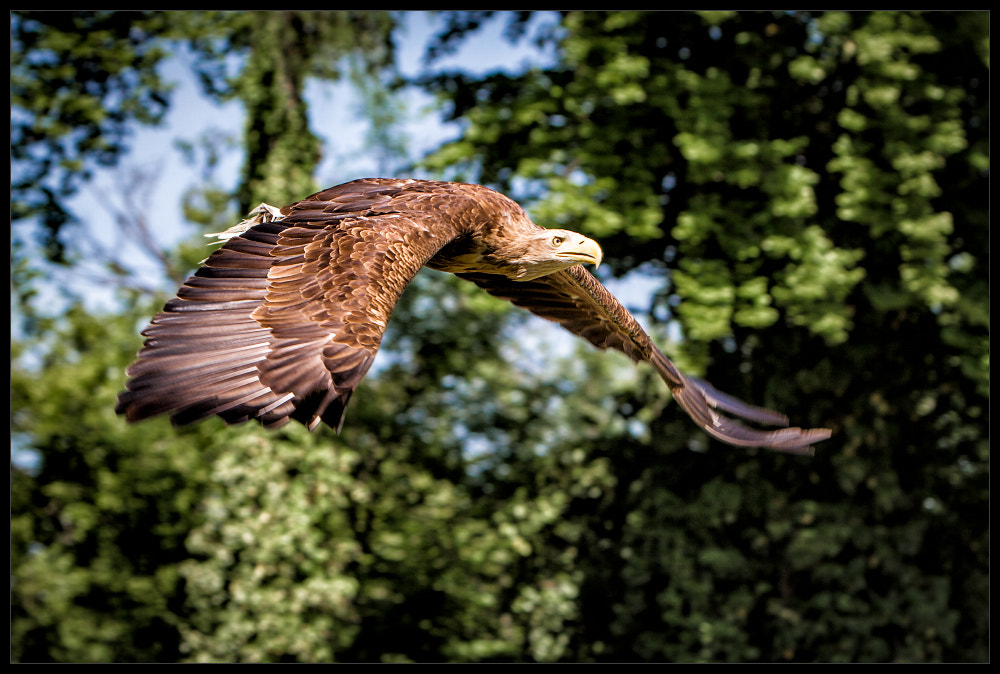 Photograph adler by René Unger on 500px