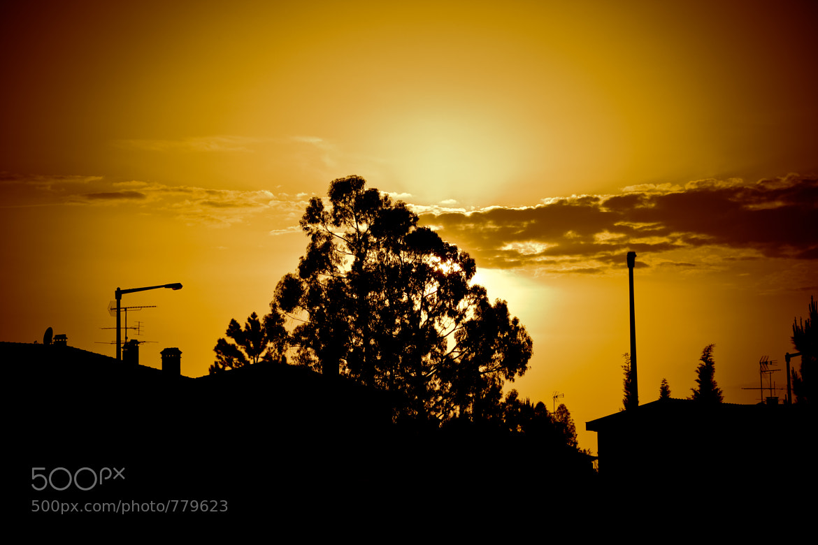 Photograph Sunset by Pedro Thomaz on 500px