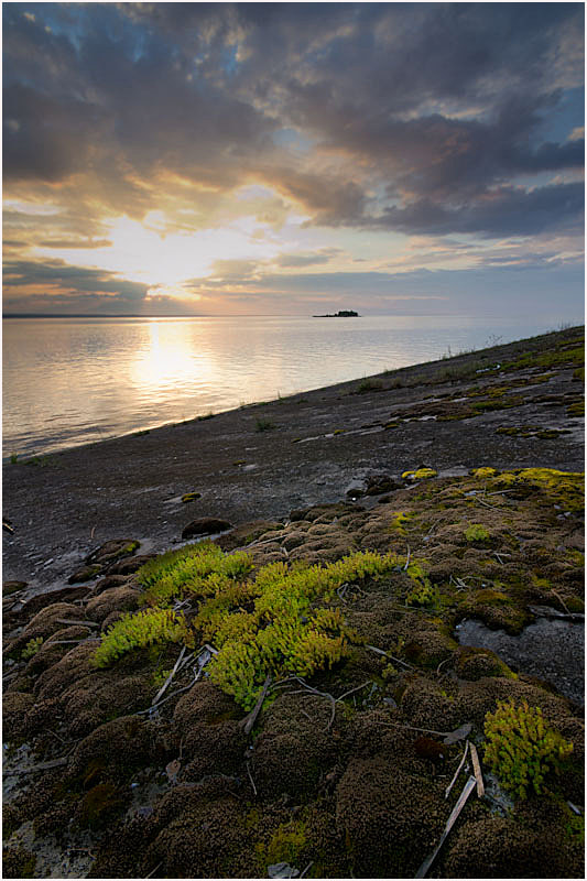 Photograph Mossy evening by Artem  Tarasov on 500px