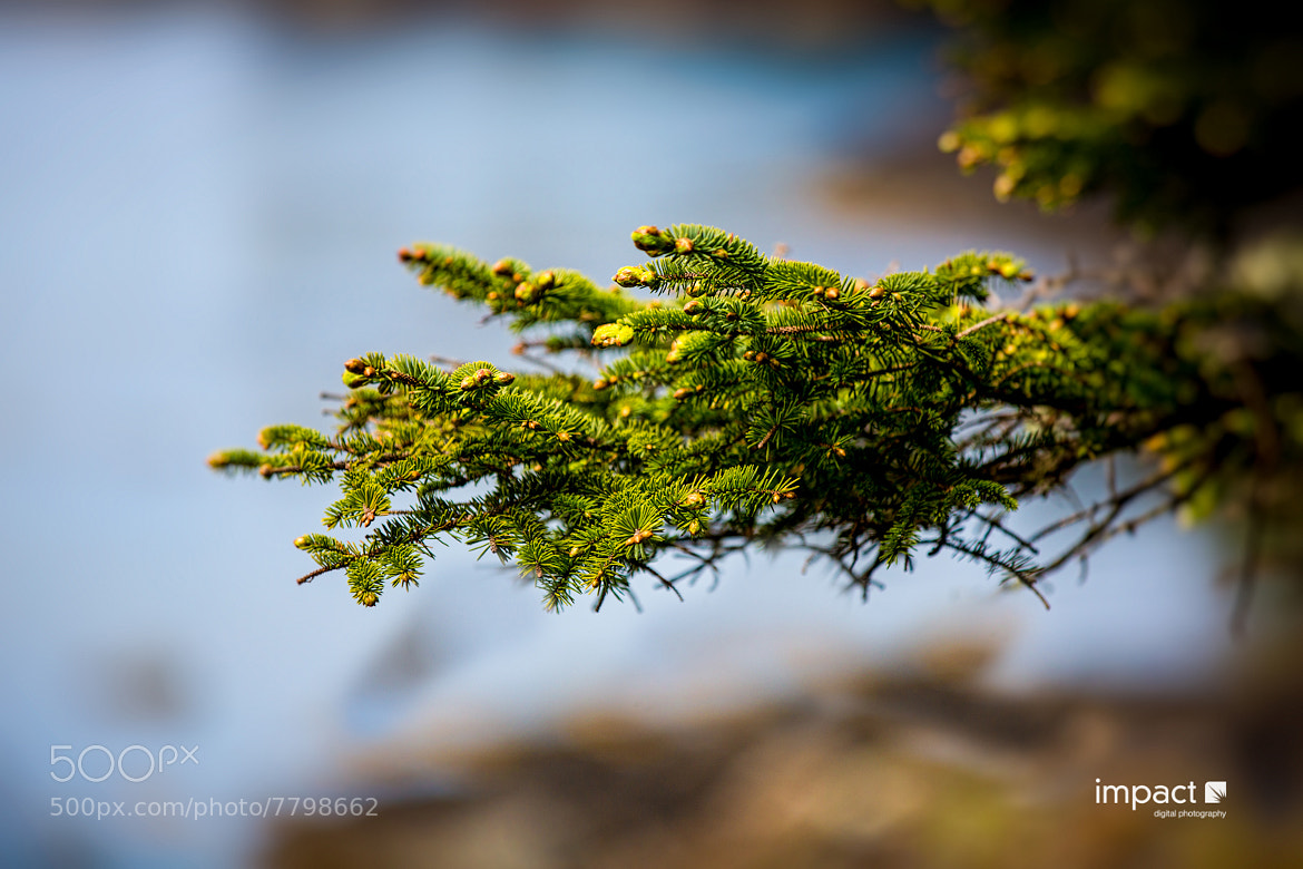 Photograph Fern by Mike Thompson on 500px