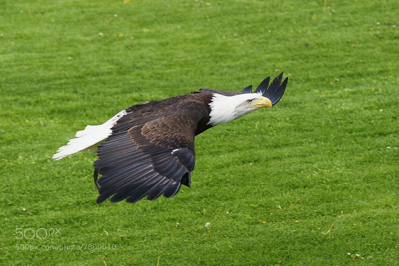 Photograph Griffon eagle by Branko Frelih on 500px
