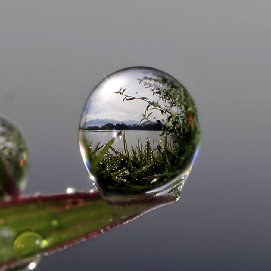 Photograph thousands dew into the dew by teguh santosa on 500px