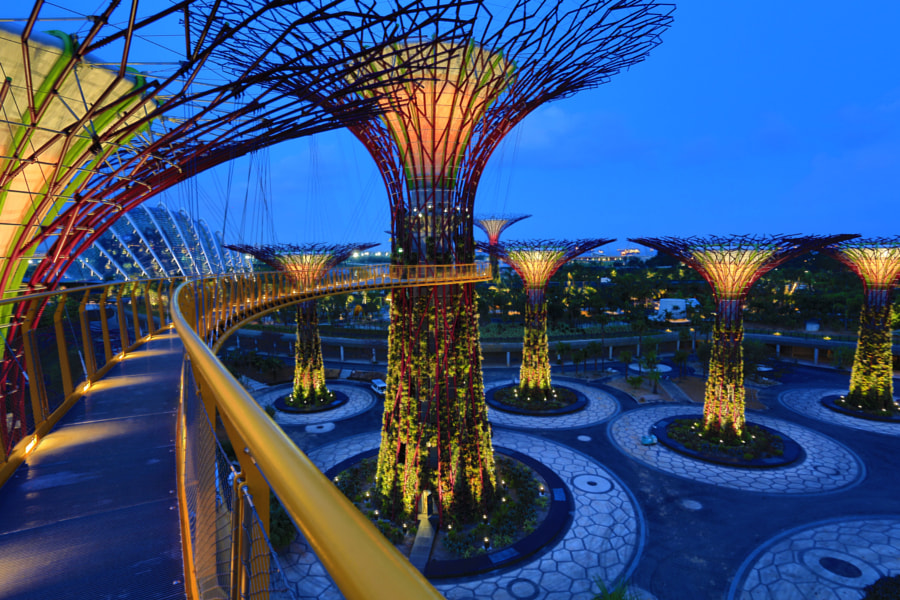 Gardens By The Bay - The SuperTrees