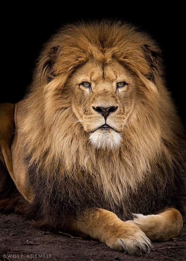 Photograph THE KING by Wolf Ademeit on 500px