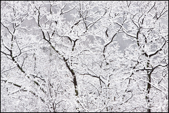 Photograph Winter's Last Breath by Chris Kayler on 500px