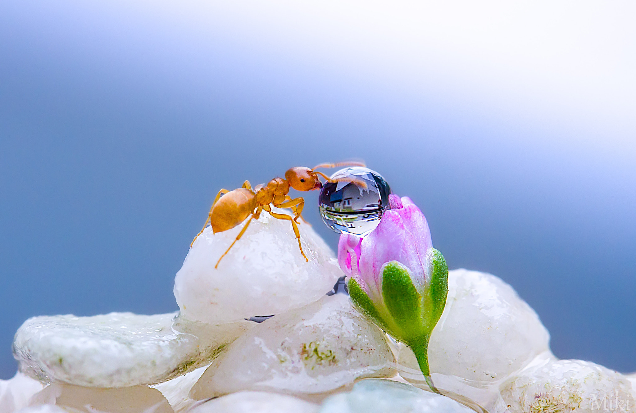 Photograph Treasure Hunter by Miki Asai on 500px