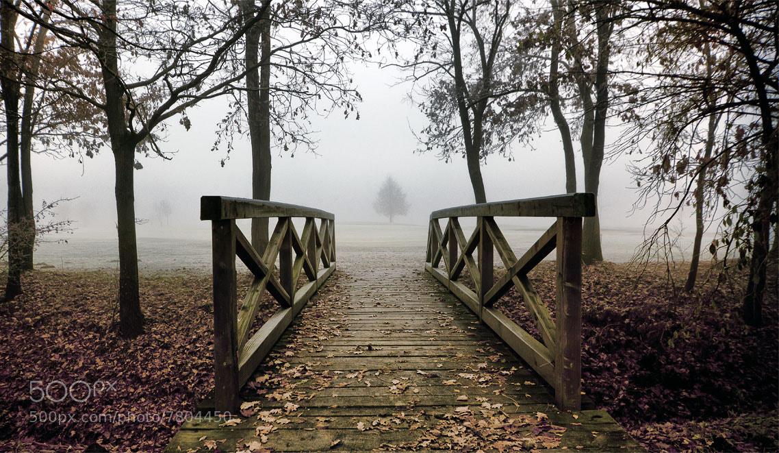 Photograph Bridge by Jaro Miščevič on 500px