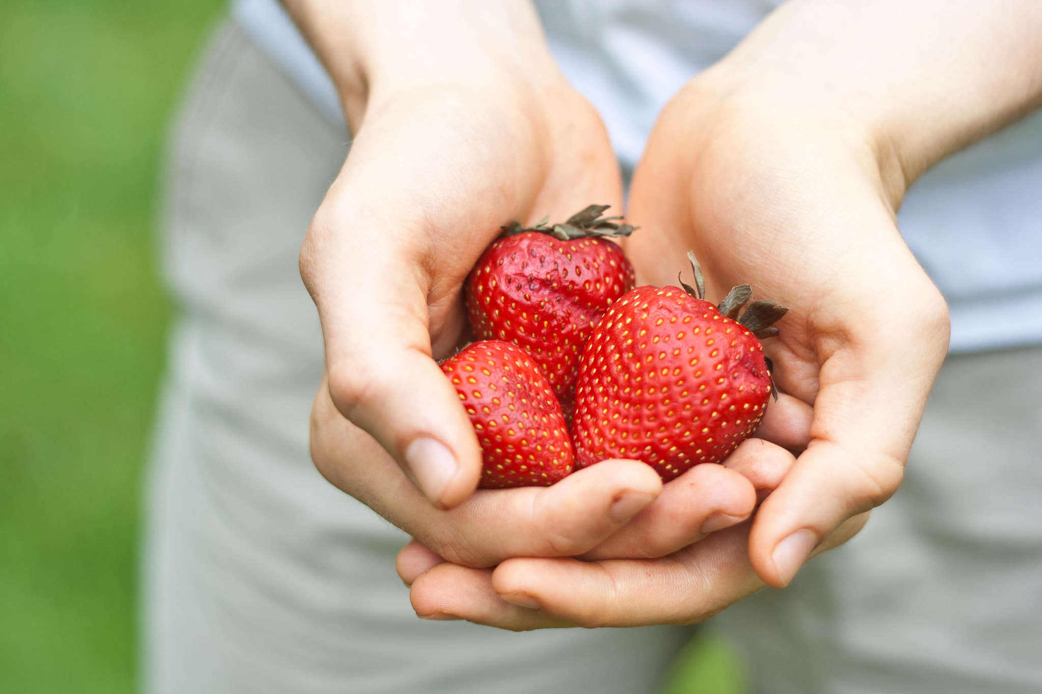 Photograph Strawberries by Evan Thomas on 500px