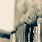 Постер, плакат: Books and other Cuddly Creatures Faridabad 2014