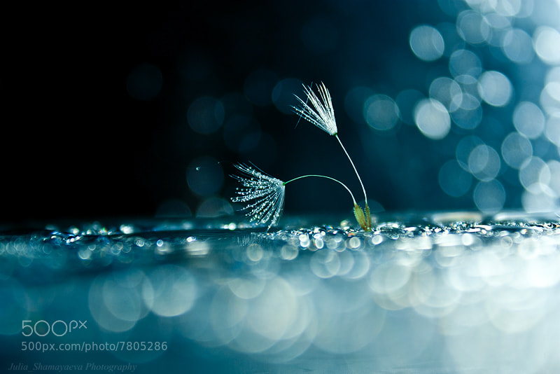 Photograph Light and water splashes by Юлия Шамаяева on 500px