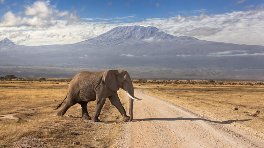 Road through Amboseli by James Forsyth on 500px.com