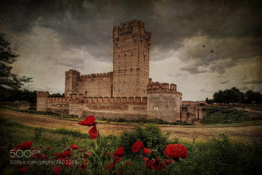 Photograph Amapolas en el castillo by Ariasgonzalo . on 500px