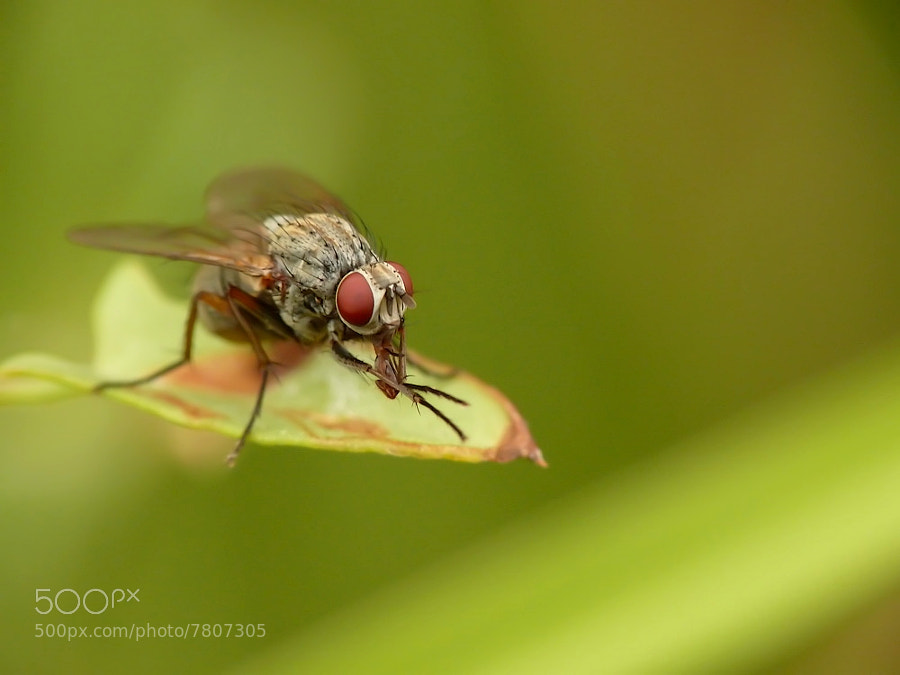 Photograph The fly by Christophe Lechès on 500px