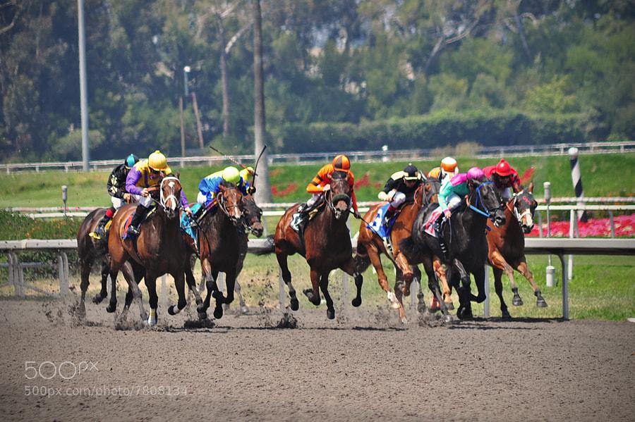 hollywood park horse racing