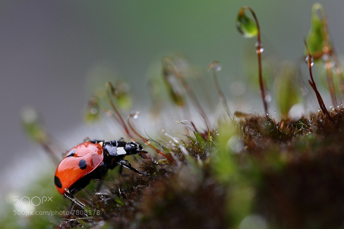 Photograph Bad weather for Ladybird by Sylvie Houtmann on 500px