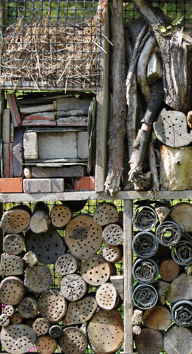 Photograph Creepy Crawly Home by Helen Dinning on 500px