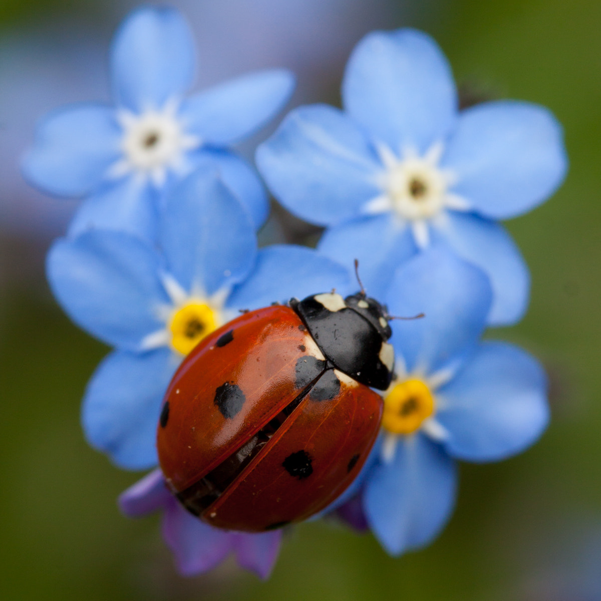 Photograph Spring Ladybug by Ada Zyborowicz on 500px