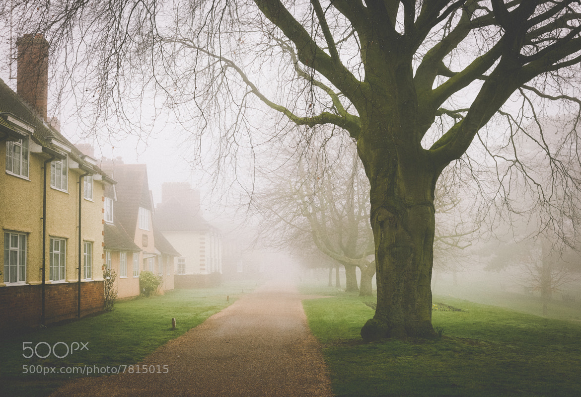 Photograph Morning Mist by Alex Ward on 500px