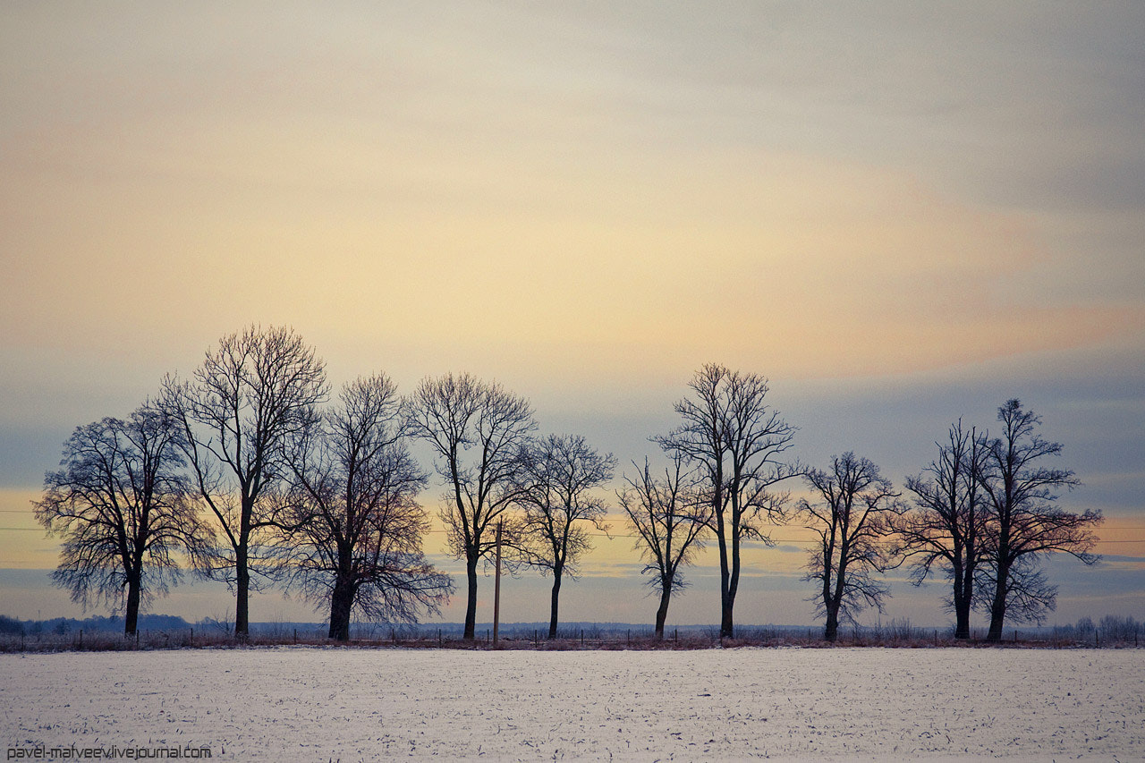 Photograph Trees by Pavel Matveev on 500px