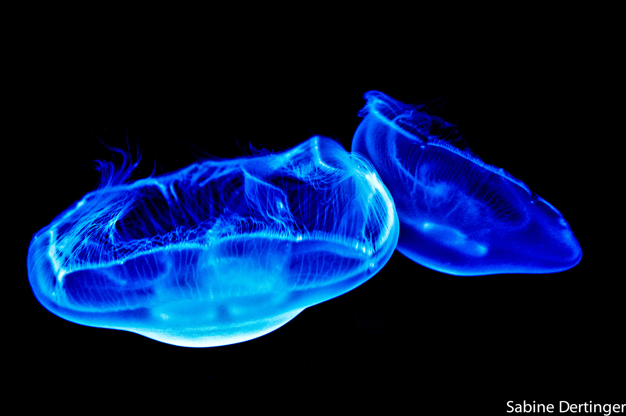 Photograph Blue by Sabine Dertinger on 500px