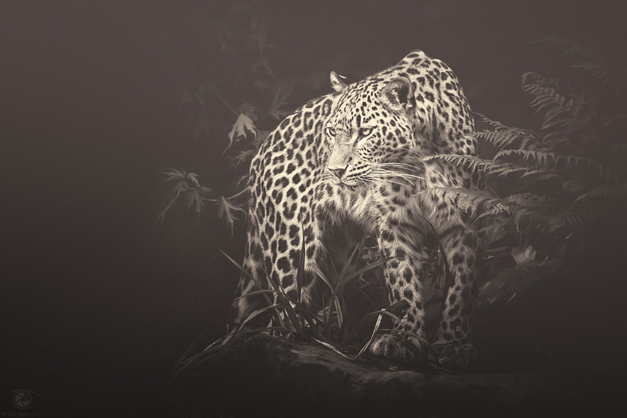 African souls: VII by Manuela Kulpa on 500px.com