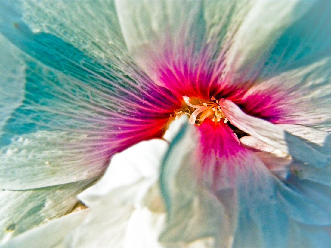 Photograph Floral Fusion by Juanita Bright on 500px