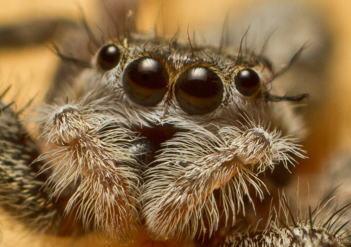 Photograph Spider by Doug Walters on 500px