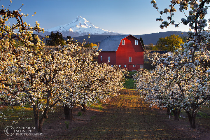 Photograph Popcorn Orchard by Zack Schnepf on 500px
