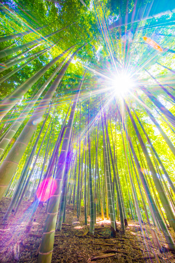 Bamboo forest of light