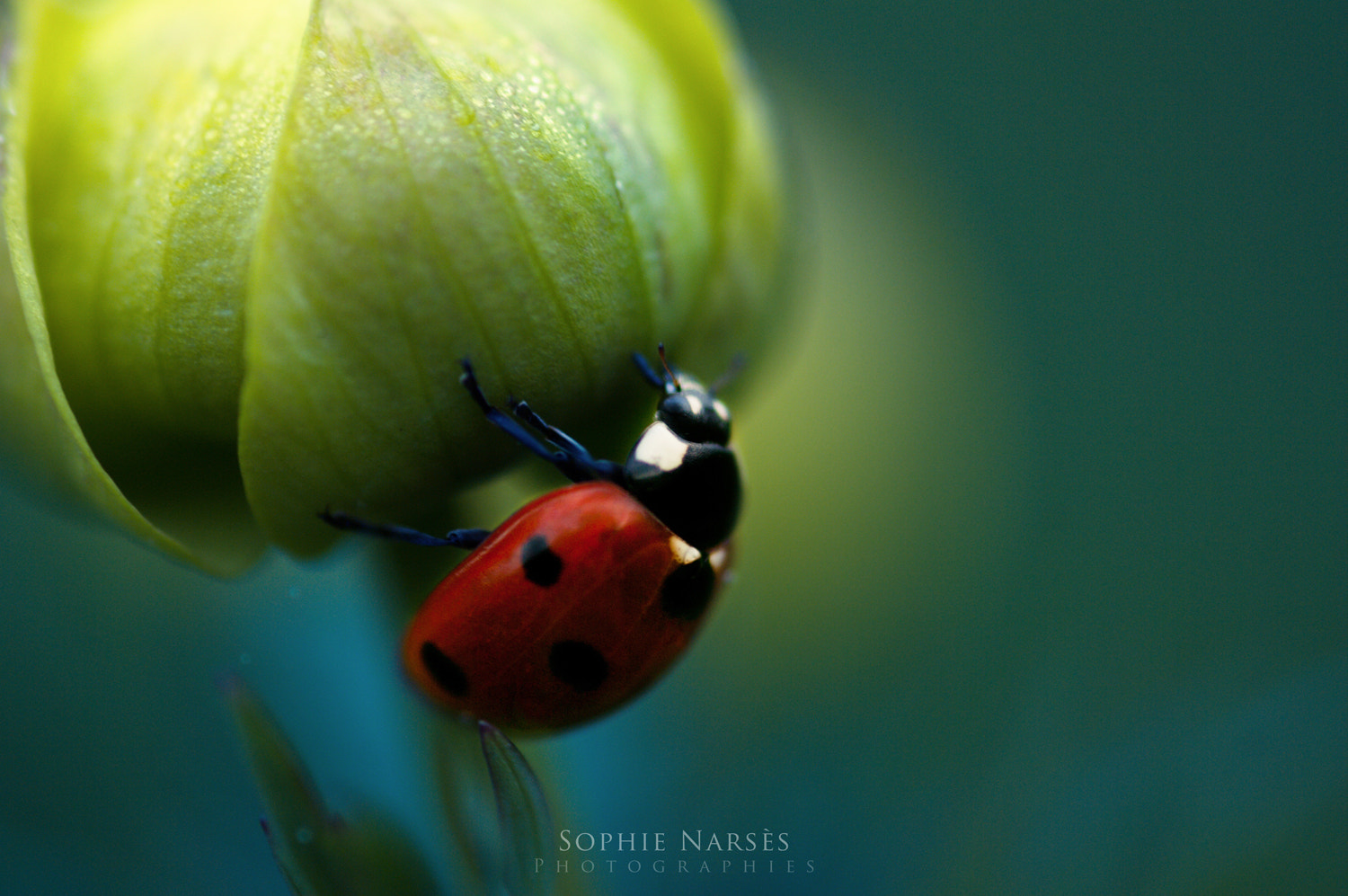 Photograph May by Sophie Narses on 500px