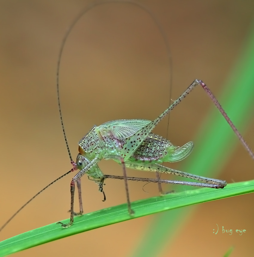 Photograph keep clean by bug eye :) on 500px