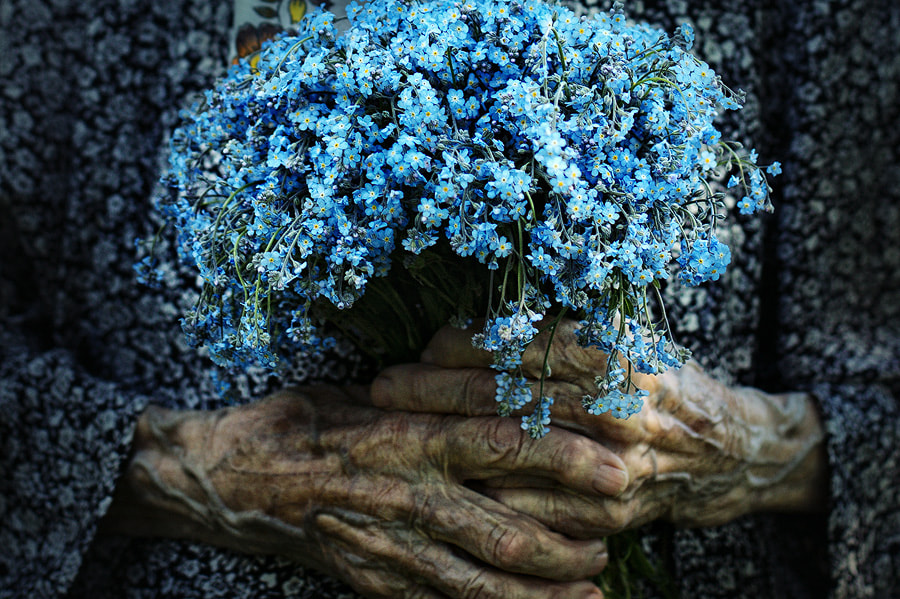 Photograph Forget-me-nots by Ludmila Yilmaz on 500px