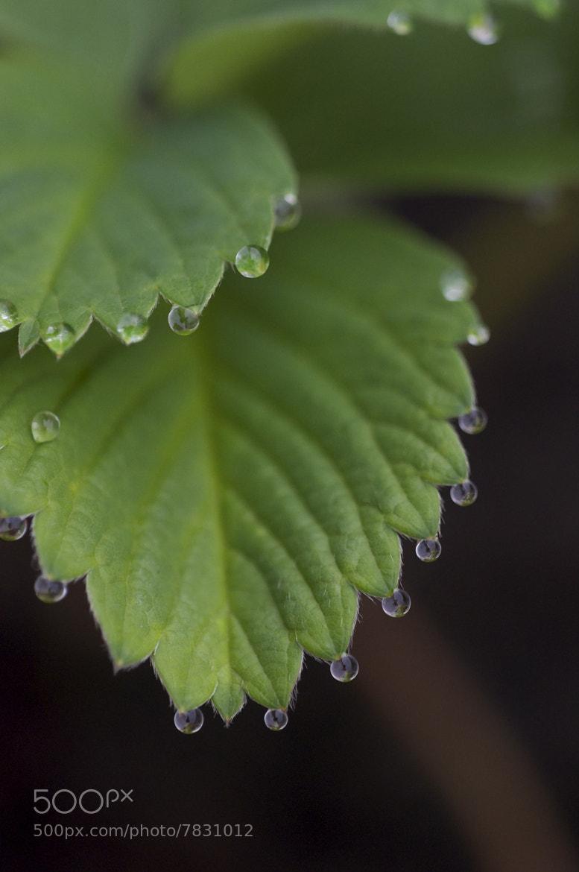 Photograph Strawberry by Michael Xornot on 500px