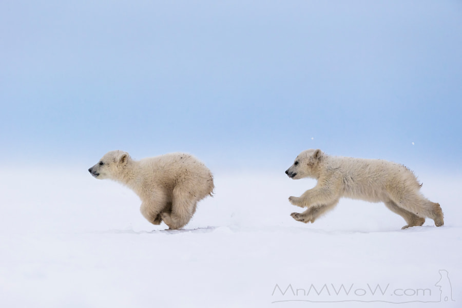 Photograph The chase by MnMWoW.com Wildlife Photography on 500px