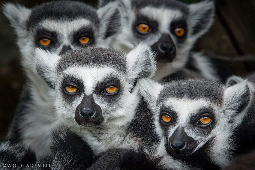 Photograph GREMLINS by Wolf Ademeit on 500px