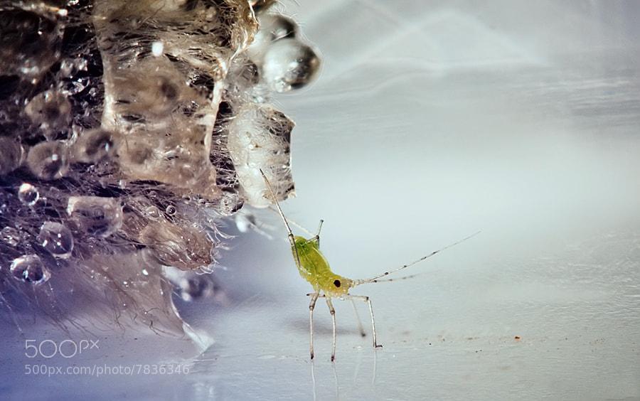 Photograph Охота на тлю by Юлия Шамаяева on 500px