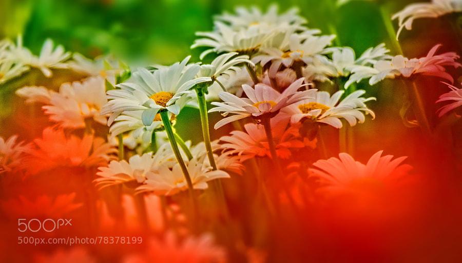 Photograph Flower mask! by Aziz Nasuti on 500px