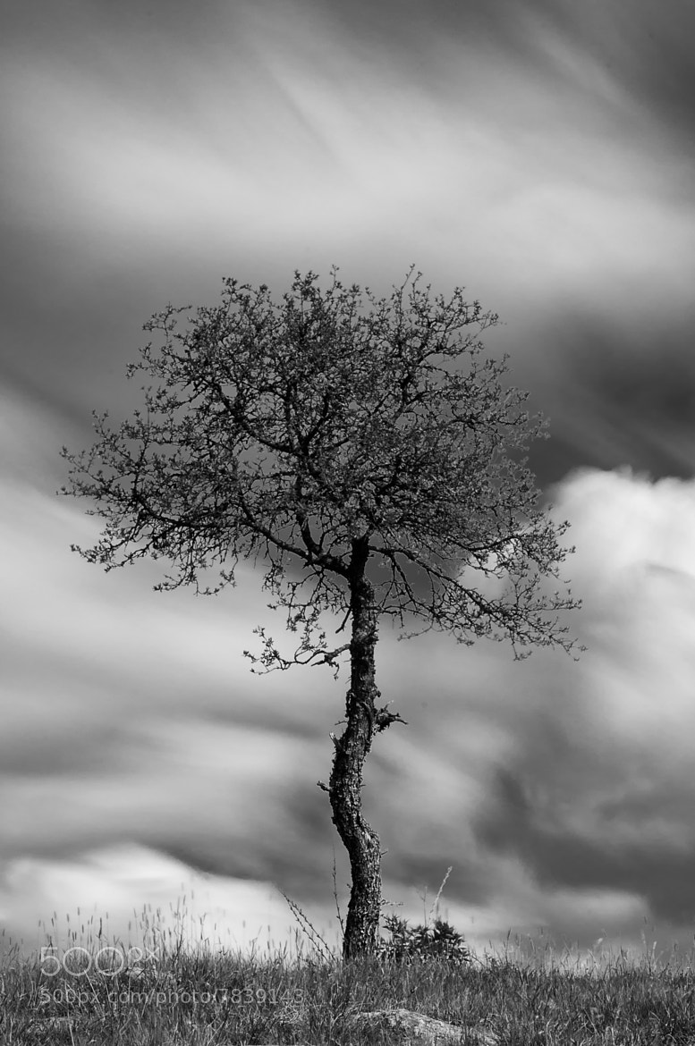 Photograph Thee tree by Fredrik Nordqvist on 500px