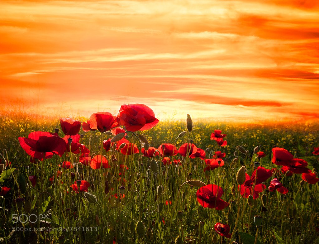 Photograph red by Marco Carmassi on 500px